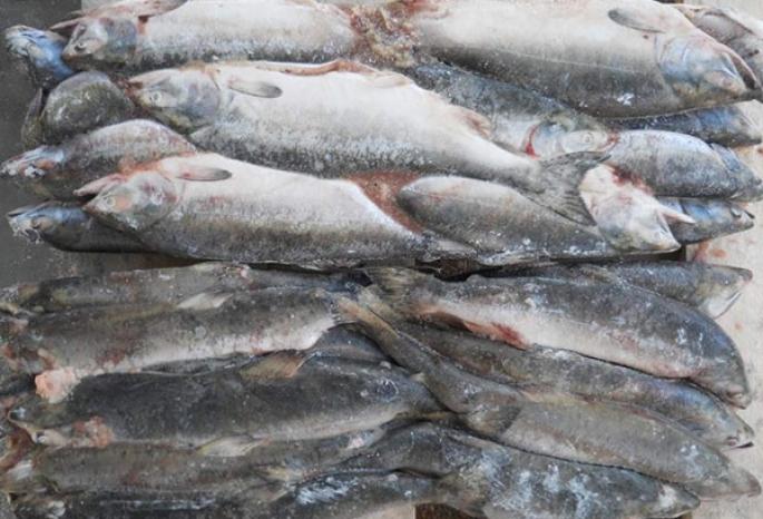 рисунки картинки рыб омской области время певец