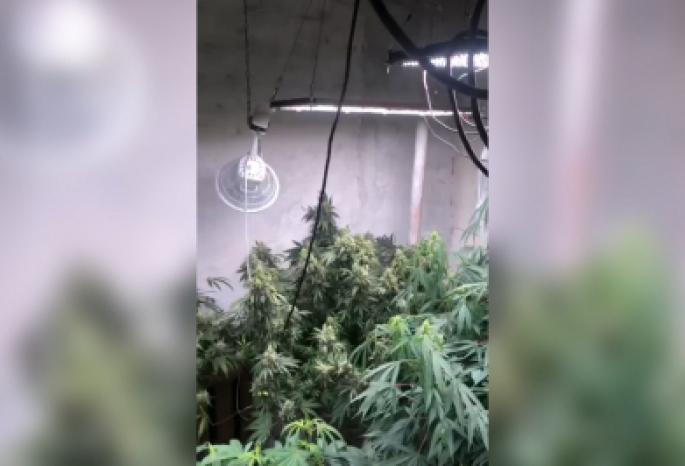 Видео помещение по выращиванию конопли для чего полезно курить марихуану