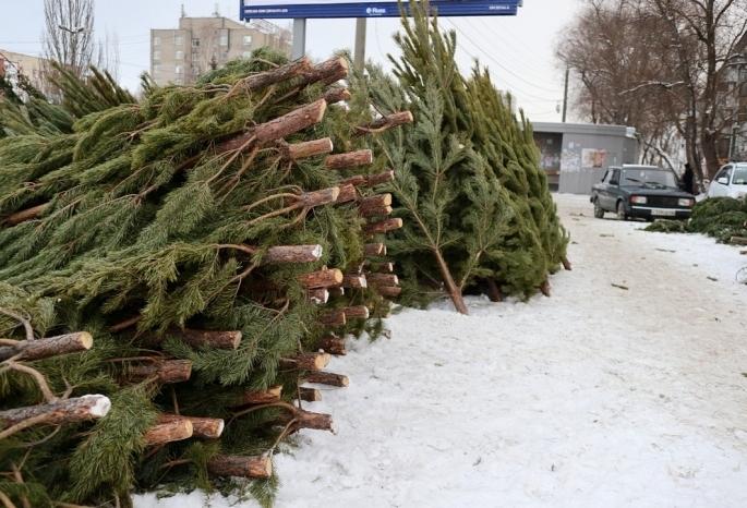 Омскому предпринимателю грозит штраф за брошенный елочный базар в Нефтяниках