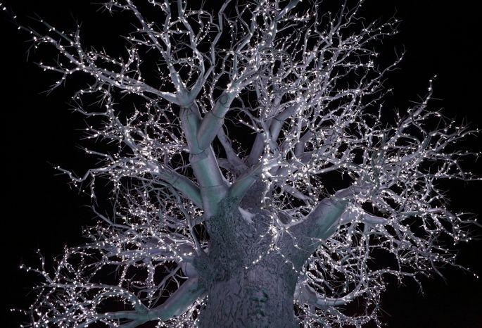Предпринимателей Омска попросили приукрасить кНовому году деревья гирляндами