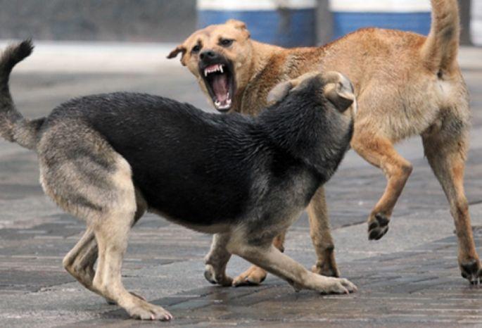 УОмского колледжа стая бродячих собак напала настудентов