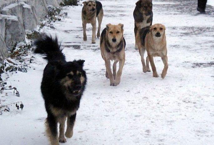 Бродячие псы напали наженщину с сыном  вОмске. Началась проверка