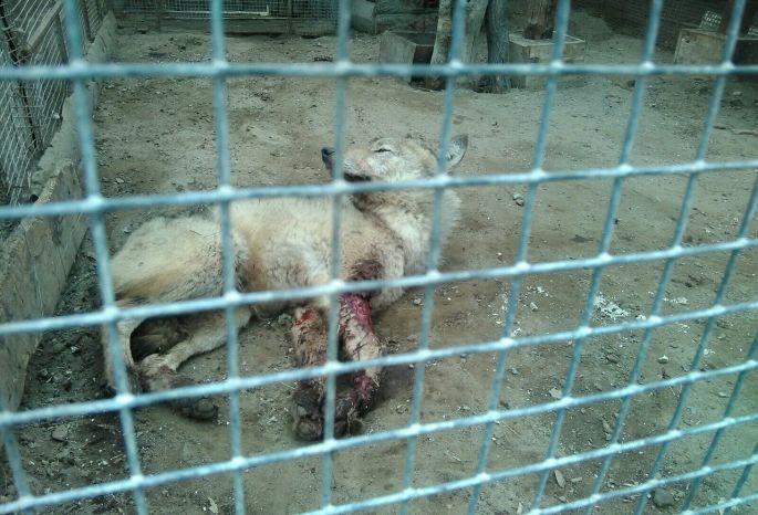 Омичи пребывают вшоке отБольшереченского зоопарка