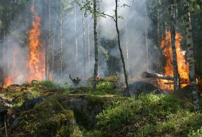 ВОмской области намесяц ввели особый противопожарный режим