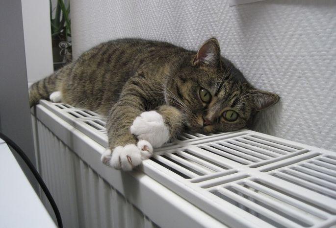 Фролов пообещал дать тепло к25сентября