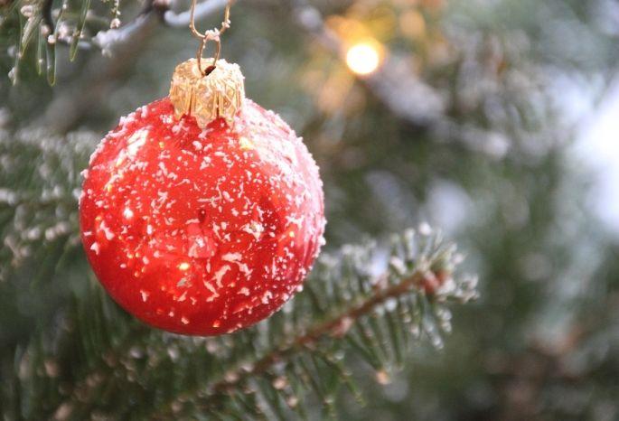 ВОмской области кНовому году срубят 45 тыс. хвойных деревьев