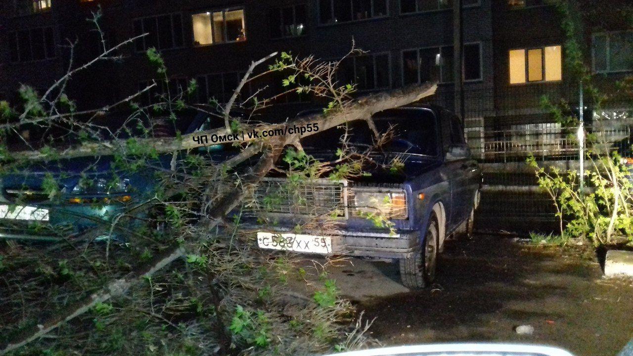 Сломанные деревья, поваленные столбы иразбитые автомобили— Ветер вОмске