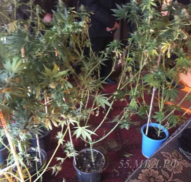 ВОмской области полицейские накрыли нарколабораторию